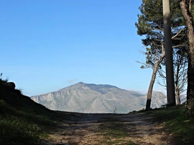 Riserva naturale orientata Bosco di Alcamo