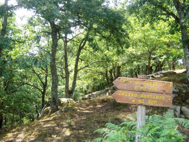 Riserva naturale orientata Bosco di Malabotta (7)