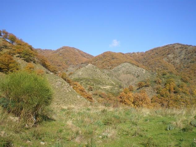Riserva naturale orientata Bosco di Malabotta (9)