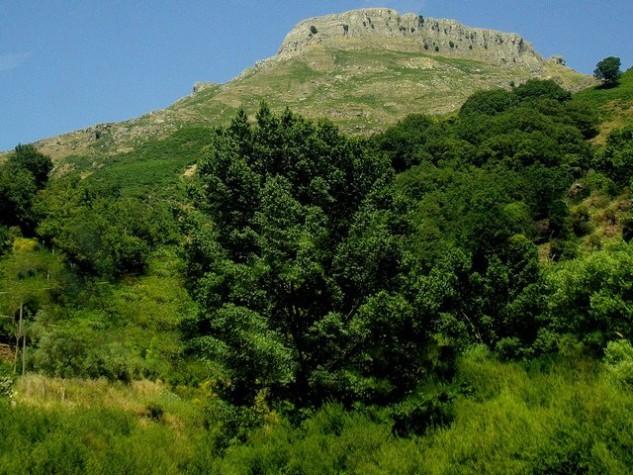 Riserva naturale orientata Fiumedinisi e Monte Scuderi (16)